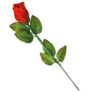 Instant Rose | Zaubertrick