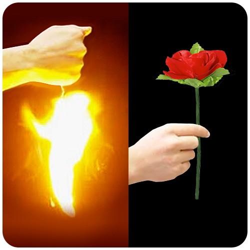 Erscheinende Rose - The Appearing Rose ECO | Zaubertrick