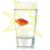 Erscheinender Goldfisch - Instant Fish